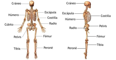 dolor de espalda baja al sentarse con las piernas extendidas