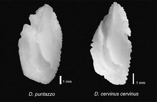 Imagen extra�da del trabajo de Rosa Mª Dom�nguez Seoane, Licenciada en Ciencias del Mar
