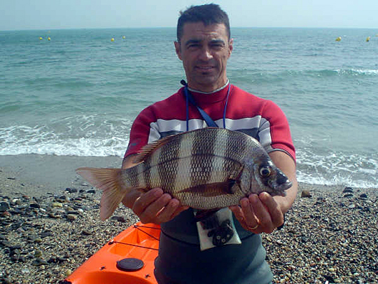"Sargo Breado 1,850 kg, Rafa ""Bombers080"" Oct.2008"