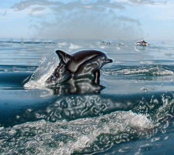 Delfines_intro1