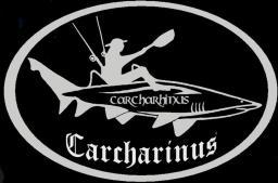 carcharinus16